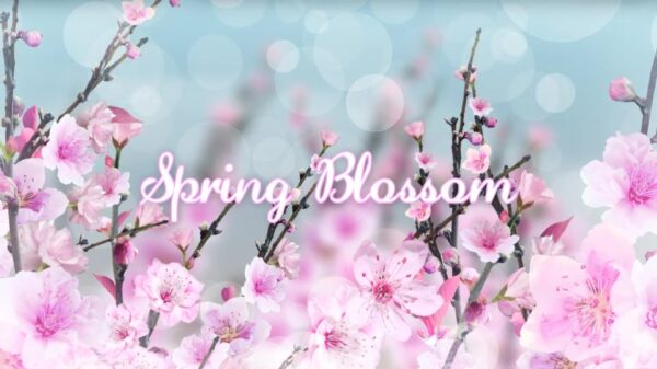 Spring Blossom After effects